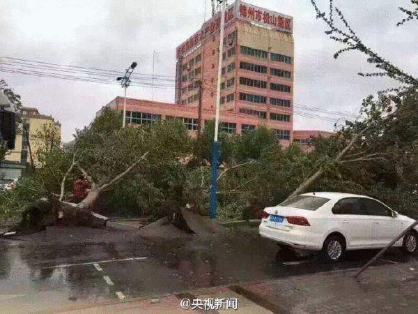 暴雨大风袭击辽宁 大树被连根拔起(图)