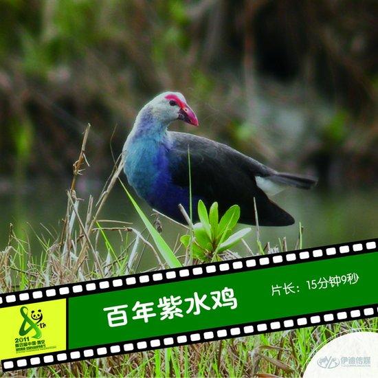 2011雅安电影节国内参展影片《百年紫水鸡》