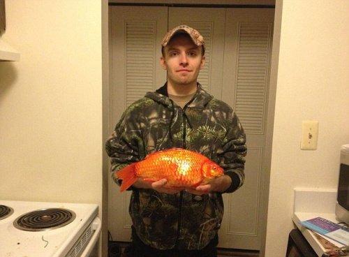 美国男子钓上一巨型金鱼 重近3斤长38厘米(图)