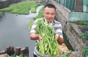 """男子水上""""菜园""""种菜 称口感比土里种出来的好"""