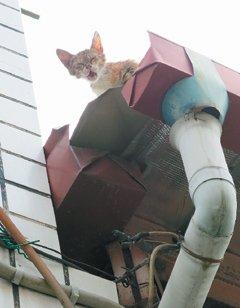 台湾一消防员救猫摔成重伤 网友热议(图)