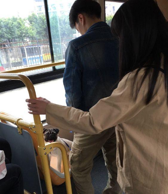 男子带宠物狗乘公交车狗坐爱心专座引乘客不满
