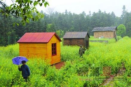 男子學開心農場給豬建別墅 欲讓豬懂風情(圖)