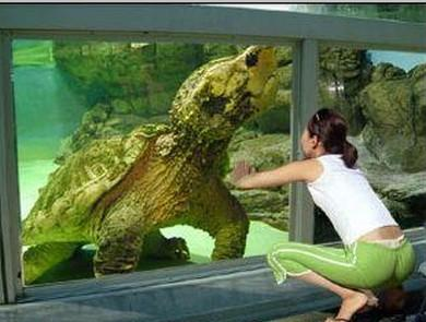 美国巨型钓到生物笔画大全图片表情包大全简画图片的小人鳄龟属最古老男子(图)图片