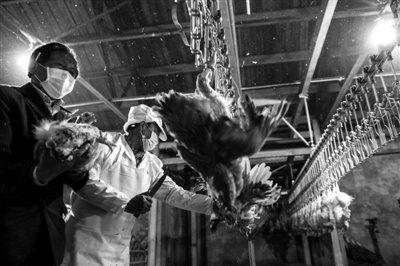 北京发现首例H7N9禽流感疑似病例 患者年仅7岁