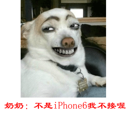 苹果手机照相动物头