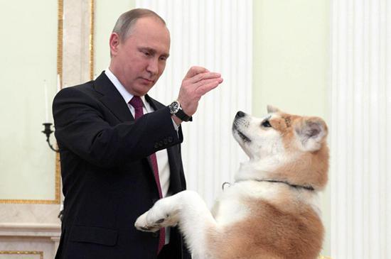 普京带着日本狗接见日本媒体人 当面逗弄(图)