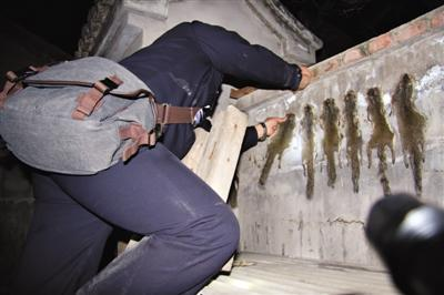 村民猎杀松鼠豹猫被刑拘 警方缴获风干毛皮22张