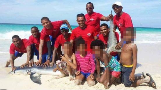 酒店保安和游客强拖鲨鱼上岸自拍 致其死亡,丧心病狂啊!