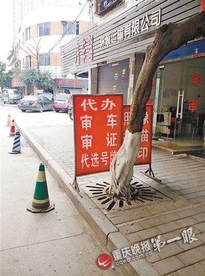 黄牛在车管所外叫卖吉祥车牌号 要价至少1.5万