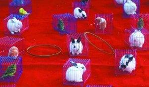 昨日,莲花池庙会,一个摊位在举行活体小动物套圈游戏。今年多处庙会出现类似游戏,引发虐待动物的争议。本报记者 薛珺 摄