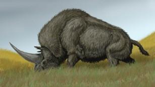 科学家发现独角兽头骨化石 形如犀牛而非马