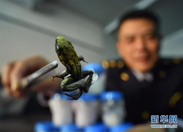 北京出入境检验检疫局再次截获全球毒性最强物种之一箭毒蛙活体