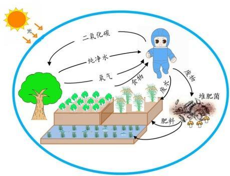 """中国科学家将如何在""""天宫二号""""上种粮种菜?"""