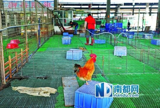 p> 2月14日,江村家禽批发市场正在消毒清仓.图片