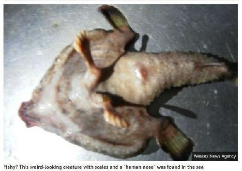 """加勒比海现""""人鼻双脚怪鱼"""" 能在海床行走(图)"""