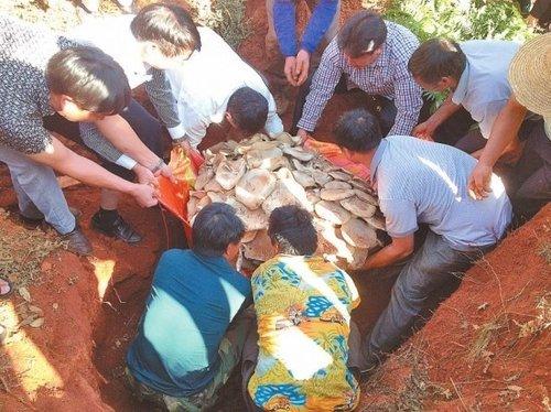 云南玉溪发现最大蘑菇 重达82.8公斤