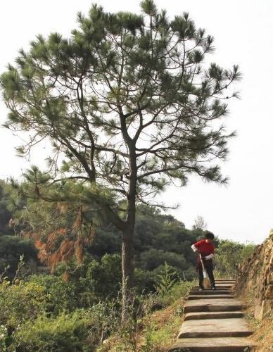 温州老夫妻义务清扫游步道4年 累计可绕地球半圈