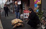 """日本老人养了个""""龟儿子"""""""