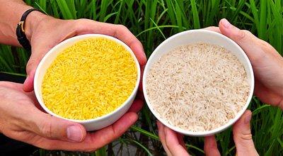 转基因大米什么颜色_黄金大米是什么可能造成什么危害黄金大米