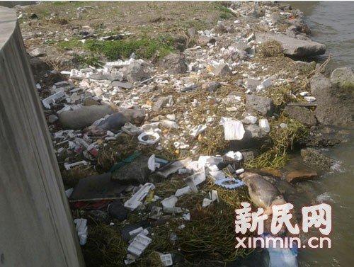 图说:3月9日在横潦泾河堤上死猪横七竖八躺着。新民网记者卜春艳现场回传