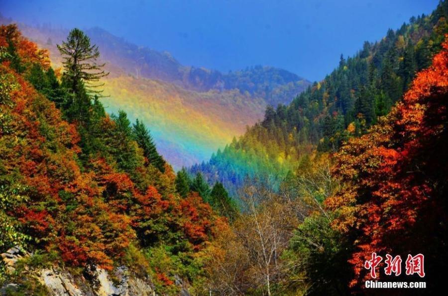 四川黑水满山红叶 犹如天然彩色画卷 - 海阔山遥 - .