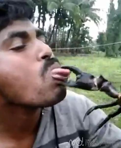 男子用舌头亲吻螃蟹钳子 被死死夹住惨叫