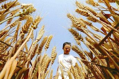 粮食丰收背后的隐忧:过度施肥加重土地贫瘠化