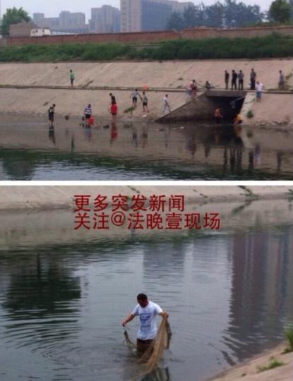 北京通惠河鲶鱼跳出水面引众人抢捞(图)
