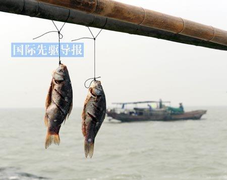中国渔民频遭海盗绑架 东海黄海渔业纠纷频发