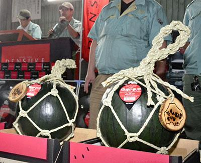 日本北海道拍卖天价西瓜一个卖35万日元(图)