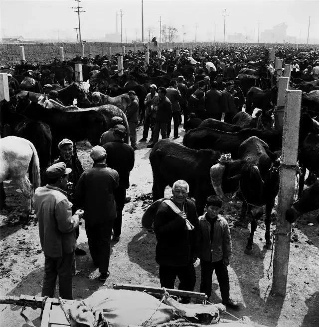 1982年1月15日,河南省洛阳市。市郊关林的骡马交易市场。这里曾是豫西地区最大的骡马交易市场。随着农村经济的发展和农业机械的大量使用,骡马交易日趋萧条,现在这种场景已不多见。