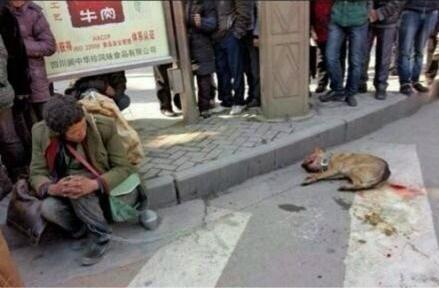高清图—四川南充阆中市宾馆门口一只流浪狗被警察杖毙