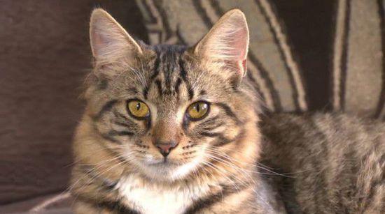 """美双性猫拟接受变性手术变""""纯爷们"""""""