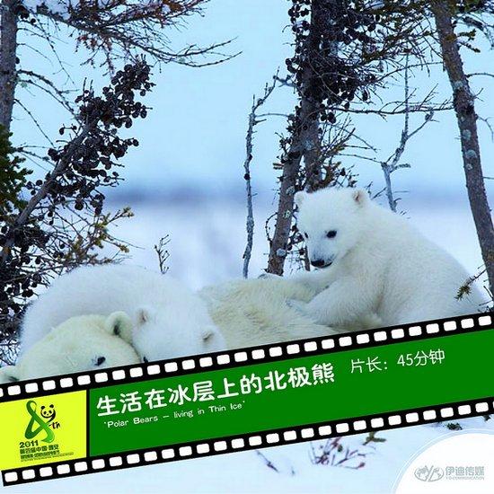 2011雅安电影节国际参展影片《生活在冰层上的北极熊》