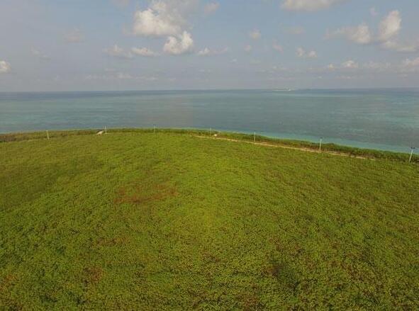 海南三沙的39万棵树是这么种的 - 海阔山遥 - .