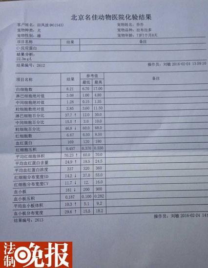 北京被掳导盲犬身体无大碍 医生免其体检费用