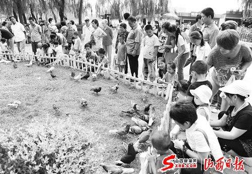 太原市迎泽公园,许多家长领着孩子和鸽子嬉闹,呈现出人与动物和谐相处