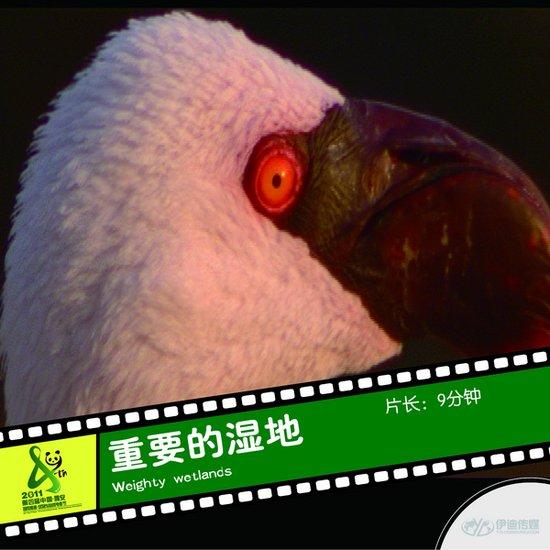 2011雅安电影节国际参展影片《重要的湿地》