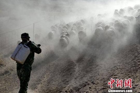 甘肃肃南严重旱情致五千余头牲畜渴死(图)