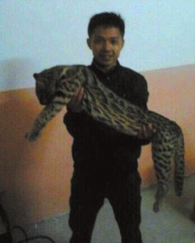 """广西宾阳警方改口称""""猎杀豹猫""""属实"""