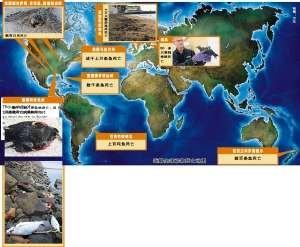 """动物""""集体自杀""""蔓延全球 网友称2012先兆(图)"""
