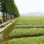 江苏2015年高标准农田比重将占一半