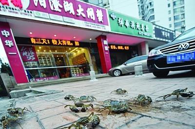 """水产店忘关店门 上百只螃蟹""""叠罗汉""""出逃(图)"""