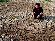 面对因干旱稻田农田欲哭无泪