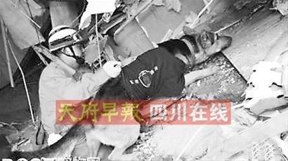 央视报道救32人的搜救犬玉树牺牲是假新闻