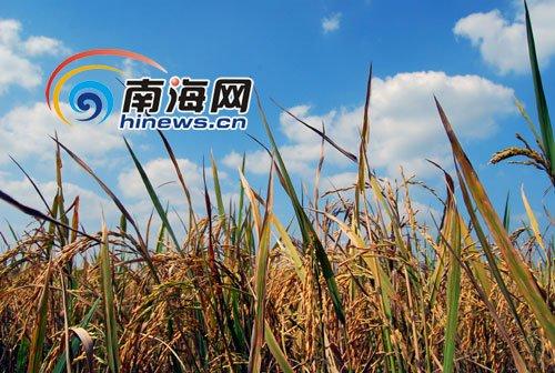 海南农产品公司慰问灾区 长寿老人获赠长寿米