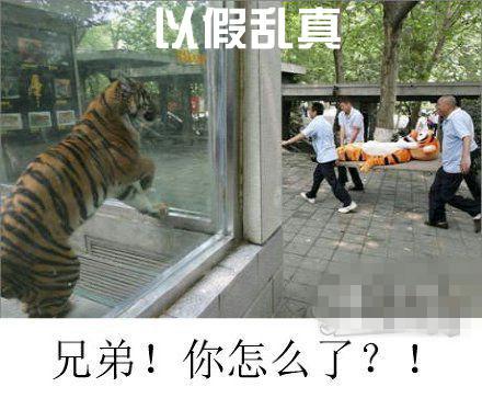 新闻哥吐槽:女子买中国假包美国退货,年入7百万!山寨走向世界图片