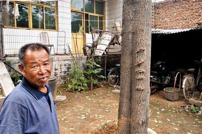 6月下旬,刘林保说,树上的疤痕是儿子刘会杰2009年发病时用刀砍下的。