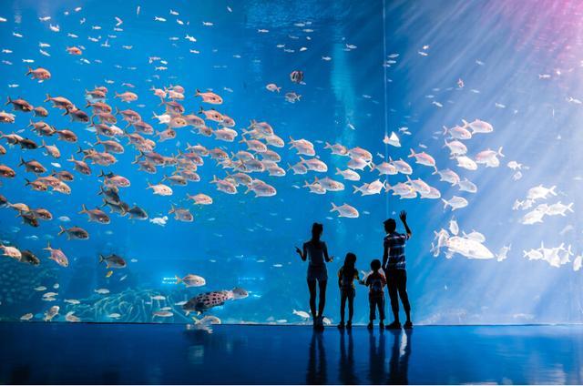 给您前所未有的海洋动物科普之旅